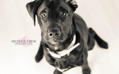 Dakota – Puppy Portraits